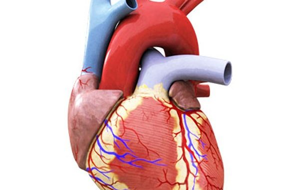 The Human Heart Online Science Notes