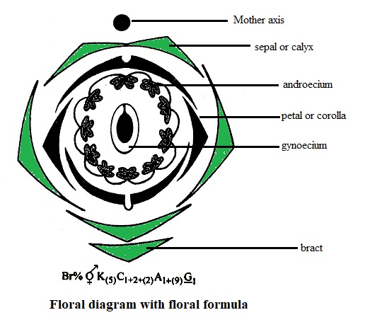 Image result for floral formula of family fabaceae