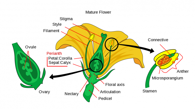 A Typical Flower And Its Parts Online Science Notes