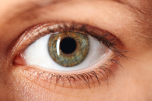 Structure Of Human Eye Online Science Notes