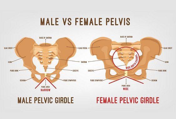 differences between male pelvis and female pelvis